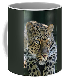 Amur Leopard #2 Coffee Mug