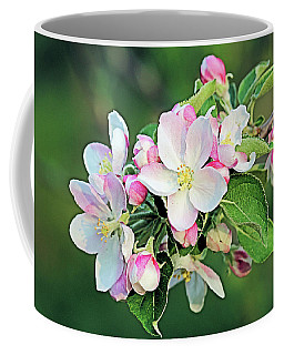 Coffee Mug featuring the photograph Apple Blossoms by Kristin Elmquist
