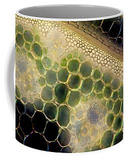 Avena Stem, Polarized Lm Coffee Mug