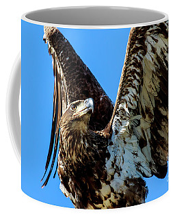 Bald Eagle Immature Coffee Mug