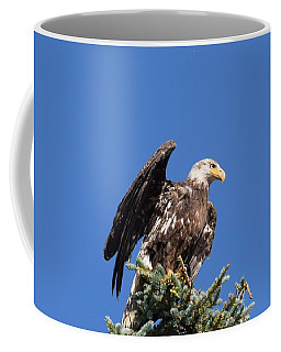 Coffee Mug featuring the photograph Bald  Eagle Juvenile Ready To Fly by Margarethe Binkley