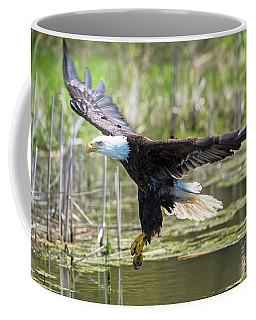 Bald Eagle-3175 Coffee Mug