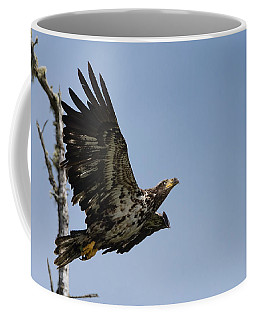 Bald Eaglet Coffee Mug