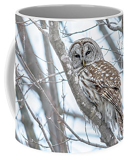 Barred Owl Beauty Coffee Mug by Cheryl Baxter