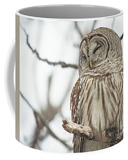 Barred Owl Coffee Mug by Cheryl Baxter