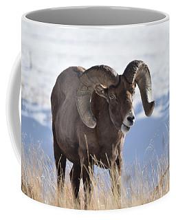 Coffee Mug featuring the photograph Big Horn Sheep by Margarethe Binkley