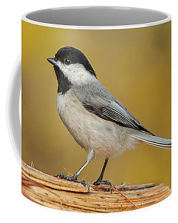 Black-capped Chickadee Coffee Mug by Jim Moore