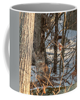 Bobcat Coffee Mug by Brenda Jacobs