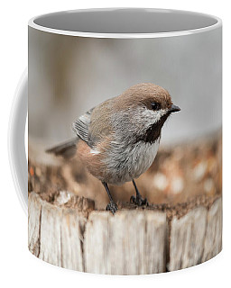 Boreal Chickadee Coffee Mug