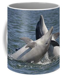 Bottlenose Dolphins  - Scotland  #15 Coffee Mug