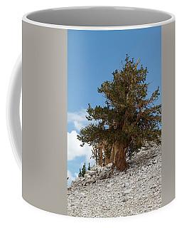Bristlecone Pine 5 Coffee Mug