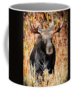Bull Moose Coffee Mug