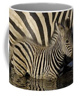 Burchells Zebra Equus Burchellii Foal Coffee Mug