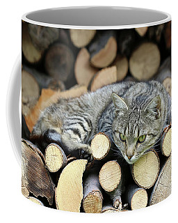 Coffee Mug featuring the photograph Cat Resting On A Heap Of Logs by Michal Boubin