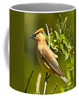 Cedar Waxwing Closeup Coffee Mug