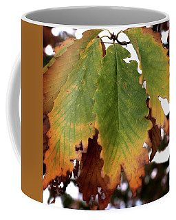 Changing Leaves Coffee Mug
