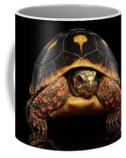 Close-up Of Red-footed Tortoises, Chelonoidis Carbonaria, Isolated Black Background Coffee Mug