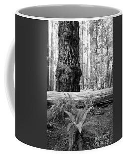 Coastal Redwoods  Coffee Mug