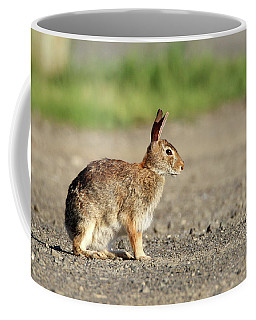Cottontail Rabbit Stony Brook New York Coffee Mug