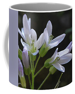 Cutleaf Toothwort 2 Coffee Mug