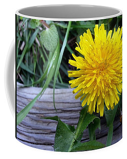 Coffee Mug featuring the photograph Dandelion by Robert Knight