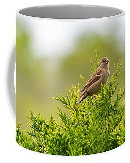 Dunnok Coffee Mug