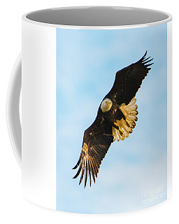 Eagle Stare Down Coffee Mug
