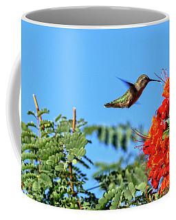 Coffee Mug featuring the photograph Feeding  Anna's Hummingbird by Robert Bales