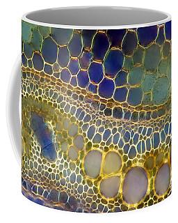 Fern Vascular Bundles, Dark Field Plm Coffee Mug