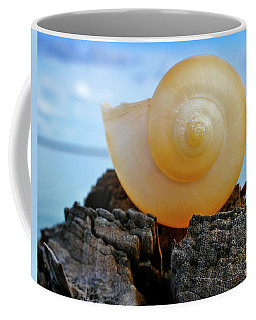 Coffee Mug featuring the photograph Fibonacci by Skip Hunt