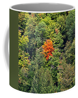 Coffee Mug featuring the photograph First Autumn Color by Alan L Graham