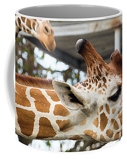 Giraffes Coffee Mug