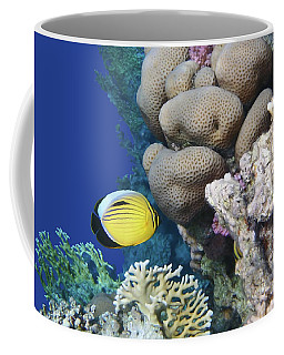 Glorious Red Sea World 3 Coffee Mug