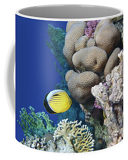 Glorious Red Sea World 3 Coffee Mug