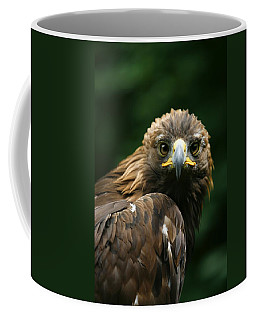 Golden Eagles Face Aquila Chrysaetos Coffee Mug