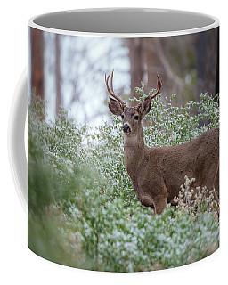 Coffee Mug featuring the photograph Grace by Jonathan Nguyen