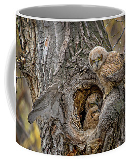 Great Horned Owlets In A Nest Coffee Mug