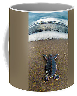 Green Sea Turtle Chelonia Mydas Coffee Mug