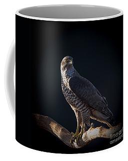 Hawk-eye Coffee Mug