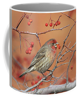 House Finch Coffee Mug