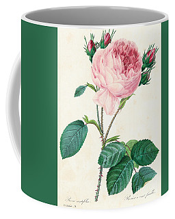 Hundred Leaved Rose Coffee Mug