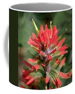Indian Paintbrush Coffee Mug