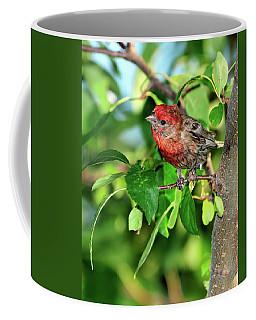 Inquisitive Coffee Mug by Betty LaRue