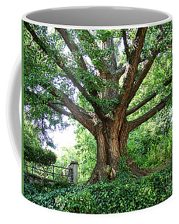 Coffee Mug featuring the photograph Inwood Ginkgo  by Cole Thompson