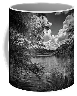 Lake Alice Coffee Mug