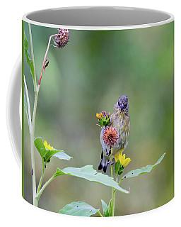 Lesser Goldfinch 4036 Coffee Mug