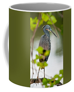 Coffee Mug featuring the photograph Little Blue Heron by Christopher Holmes