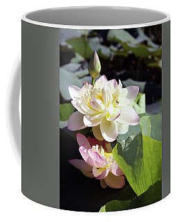 Lotus In Bloom Coffee Mug by John Lautermilch