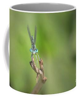 Male Blue Featherleg - Platycnemis Pennipes Coffee Mug