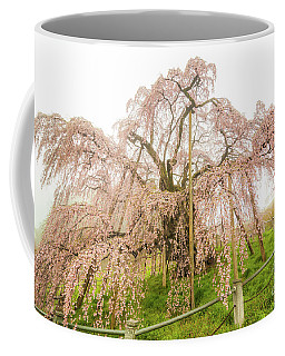 Miharu Takizakura Weeping Cherry02 Coffee Mug